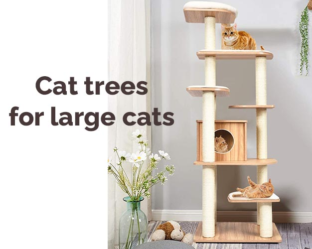 best cat trees for large cats featured image