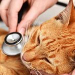 Recognizing the signs of sudden illness in cats