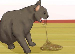 cat Vomiting